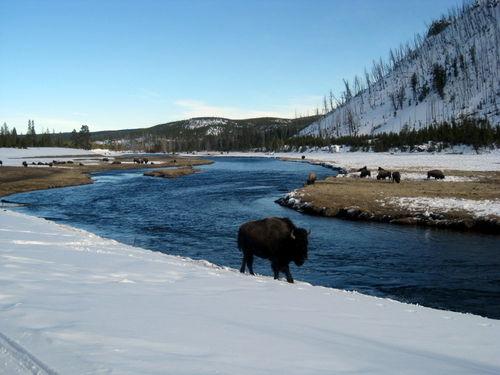 Yellowstone 211
