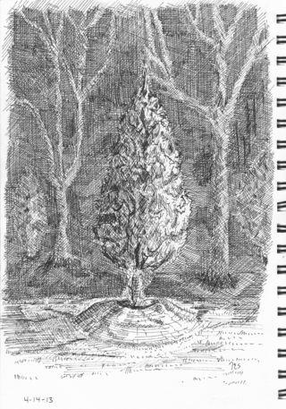 Trees_crop